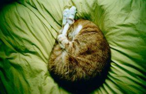 jógázó cica